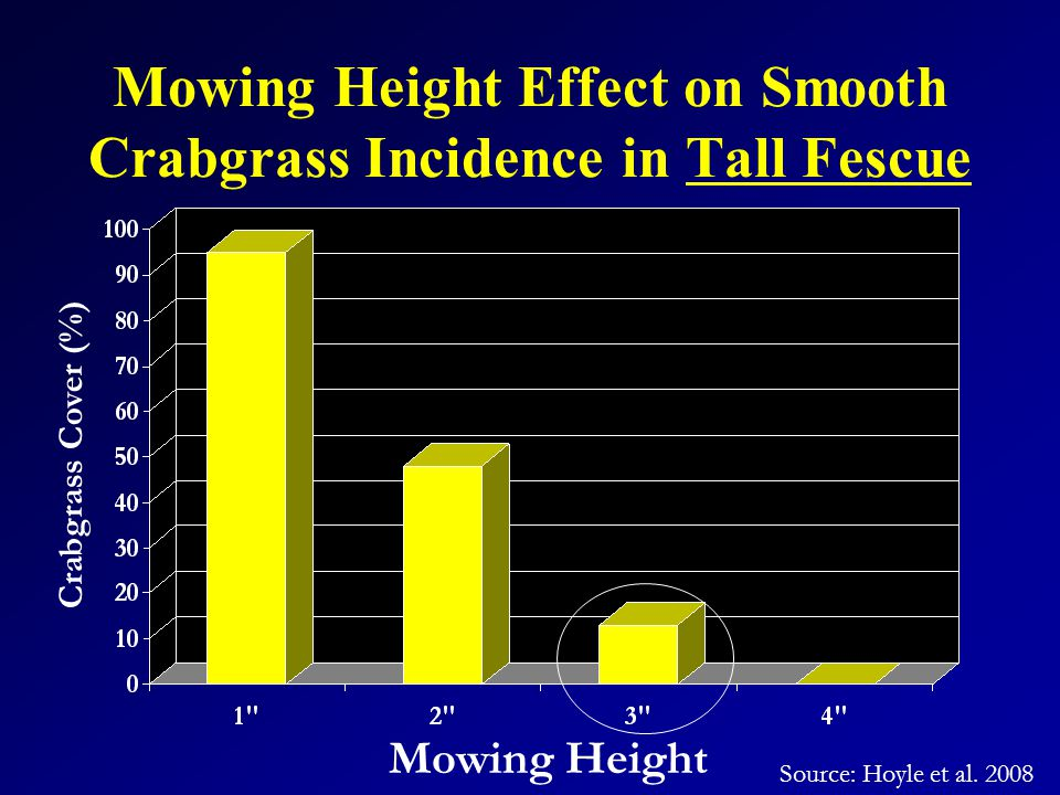 Mowing Height Effect on Smooth Crabgrass Incidence in Tall Fescue Mowing Height Crabgrass Cover (%) Source: Hoyle et al.
