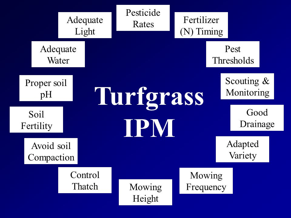 Cultural Weed Control Soil factors –Poor drainage, improper pH, or excessive compaction limit turf growth –Wet soil Sedges - purple nutsedge, green kyllinga, Rushes, Annual bluegrass, Mosses –Compacted soil Annual bluegrass, Goosegrass, Prostrate knotweed, Common lespedeza, Path rush
