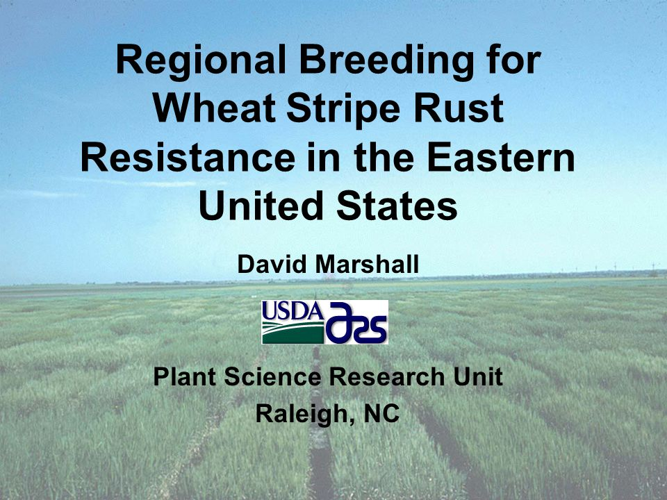 Regional Breeding for Wheat Stripe Rust Resistance in the Eastern United States David Marshall Plant Science Research Unit Raleigh, NC