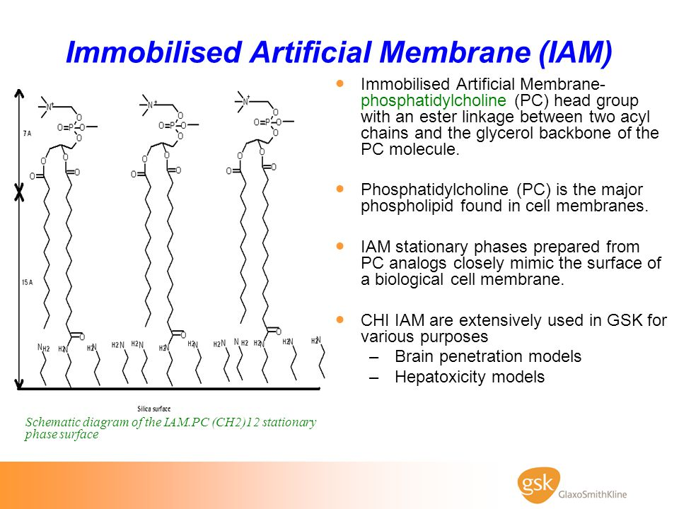 Immobilised Artificial Membrane (IAM)  Immobilised Artificial Membrane- phosphatidylcholine (PC) head group with an ester linkage between two acyl ch
