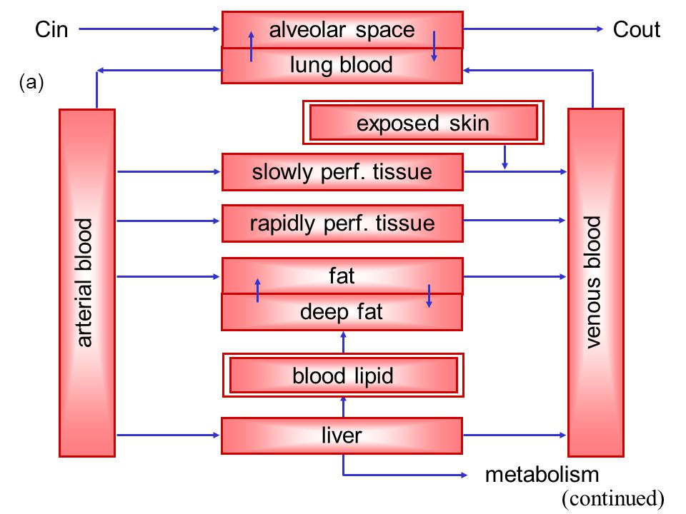 lung blood alveolar space rapidly perf. tissue fat metabolism slowly perf.