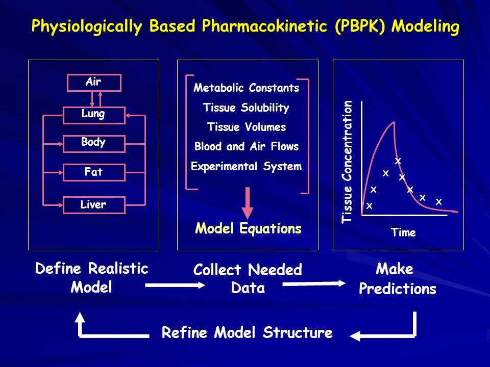 Physiologically Based Pharmacokinetic (PBPK) Modeling Define Realistic Model Collect Needed Data Refine Model Structure Make Predictions Metabolic Constants Tissue Solubility Tissue Volumes Blood and Air Flows Experimental System Model Equations X X X X X X X X Tissue Concentration Time Liver Fat Body Lung Air