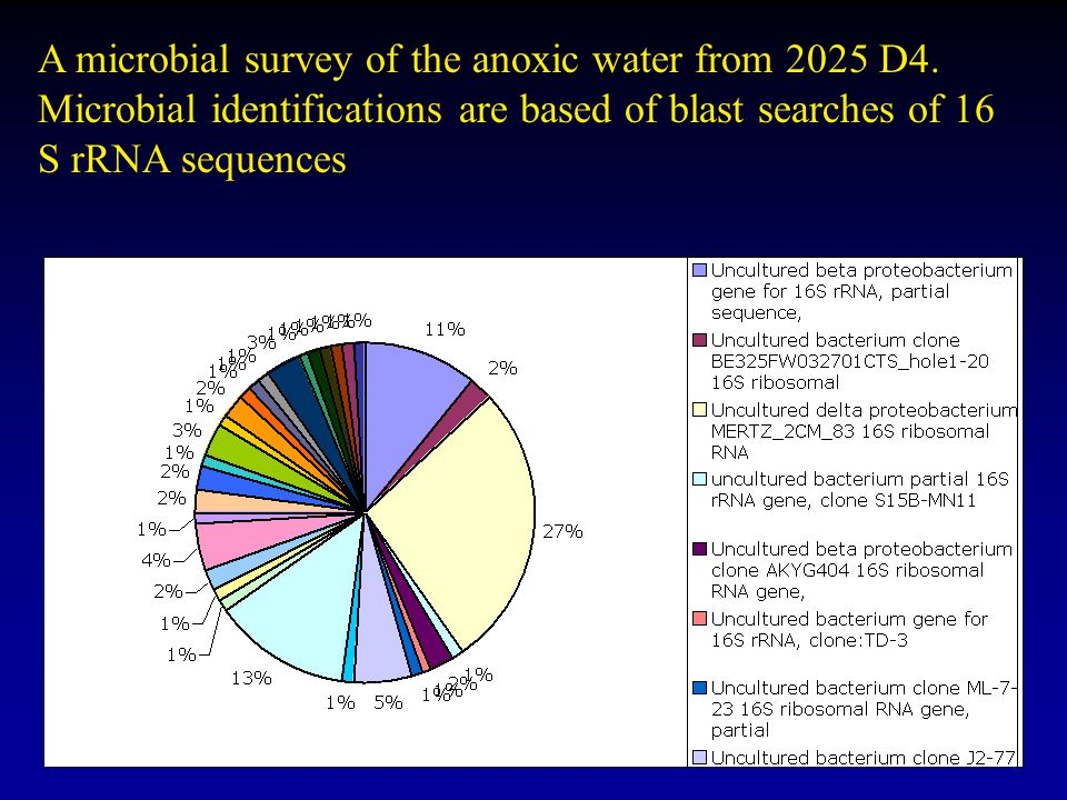 A microbial survey of the anoxic water from 2025 D4. Microbial identifications are based of blast searches of 16 S rRNA sequences.