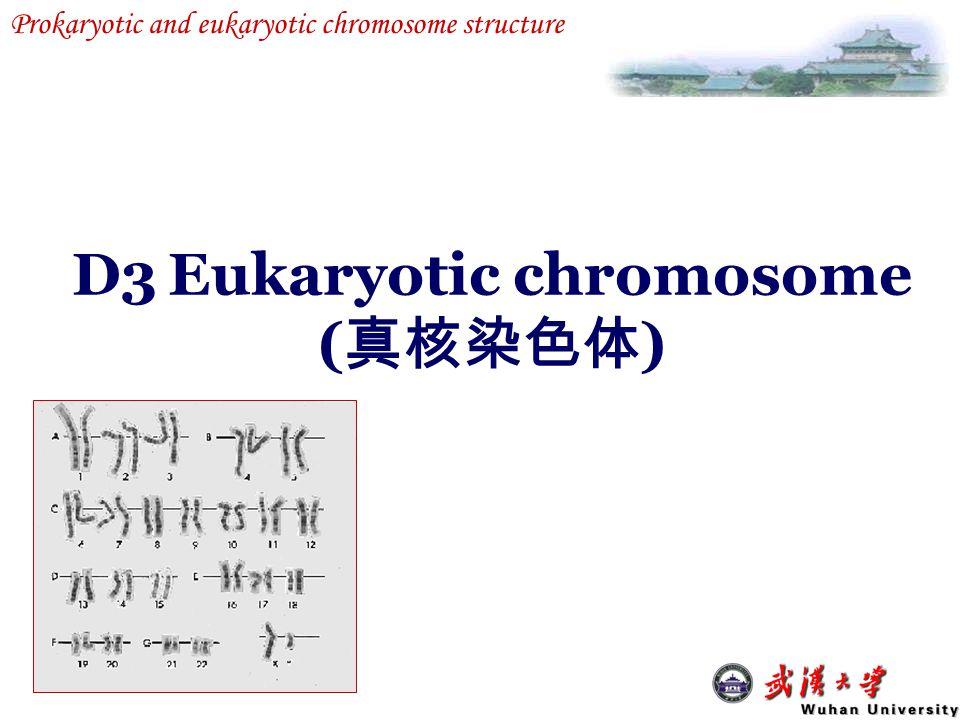 Prokaryotic and eukaryotic chromosome structure D3Eukaryotic chromosome ( 真核染色体 )