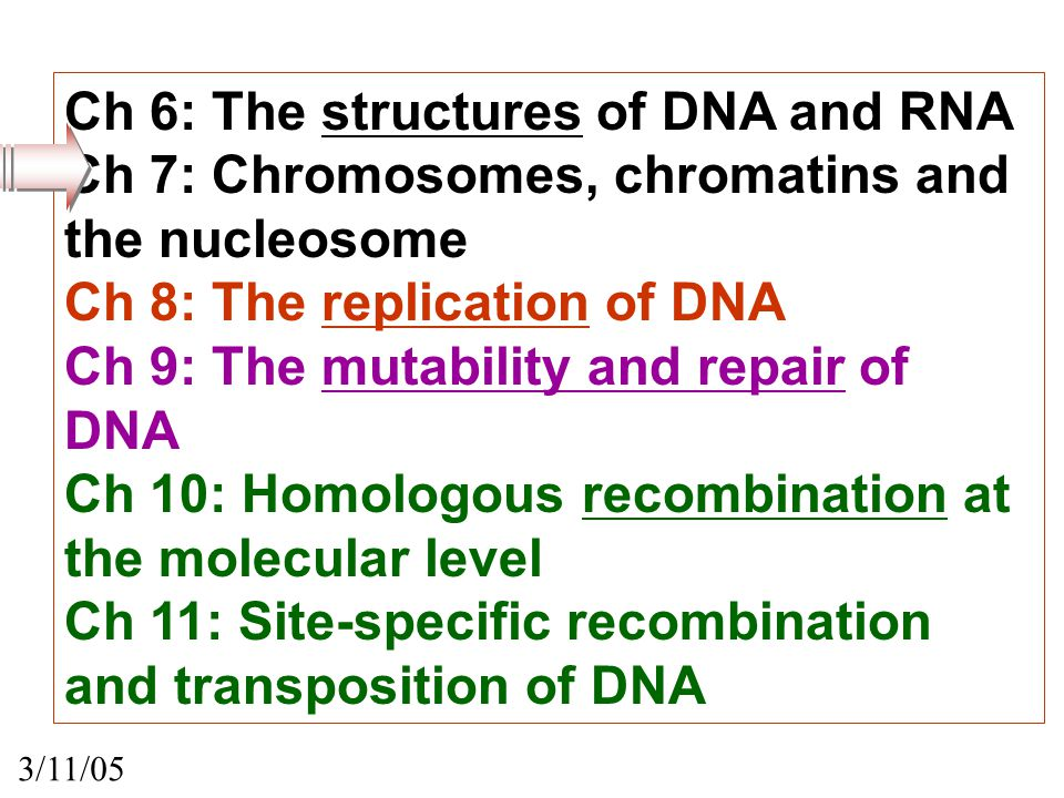 CHAPTER 7: Chromosomes, chromatin, and the nucleosome