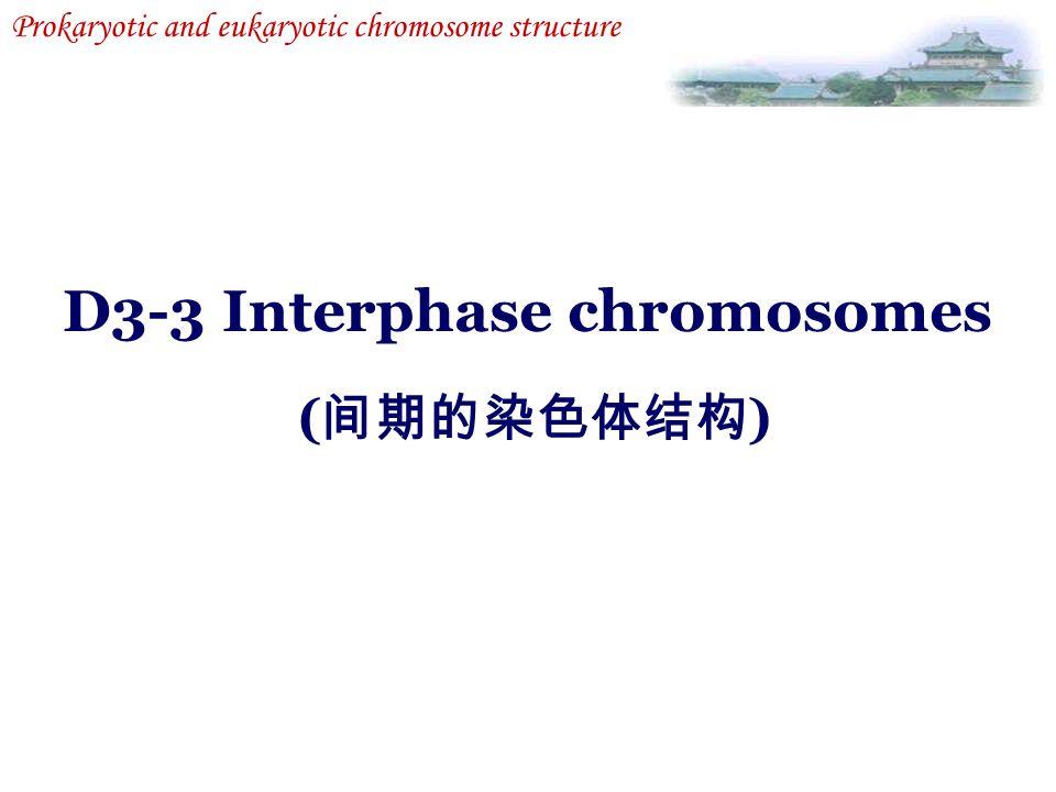 D3-3 Interphase chromosomes ( 间期的染色体结构 ) Prokaryotic and eukaryotic chromosome structure