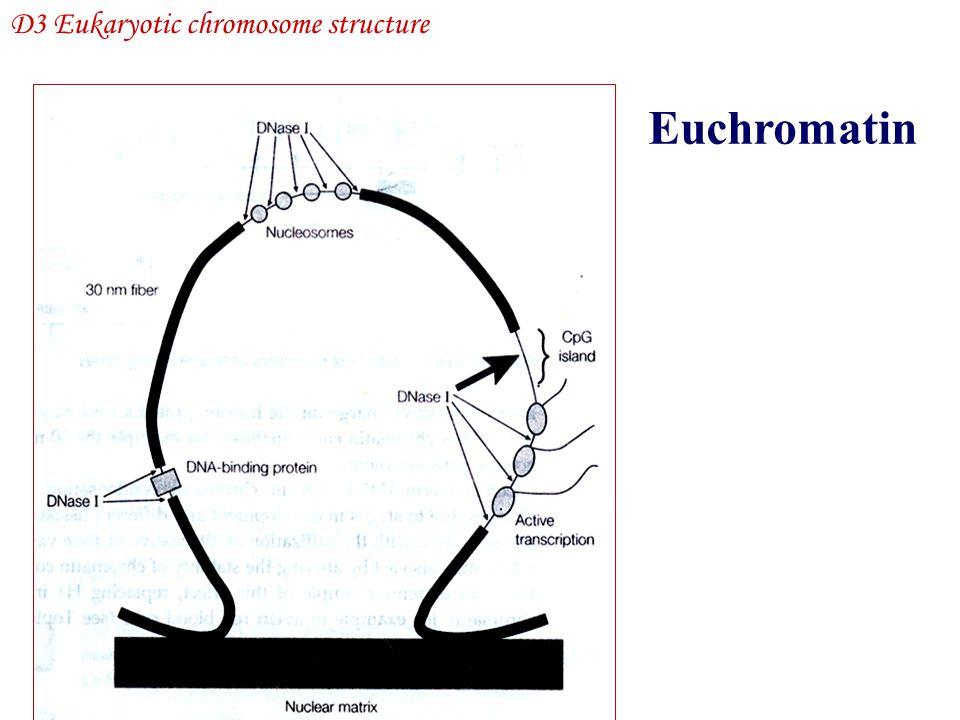 Euchromatin D3 Eukaryotic chromosome structure