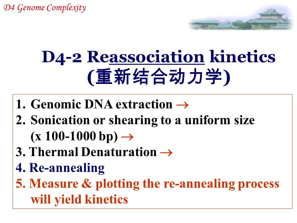 D4-2 Reassociation kinetics ( 重新结合动力学 ) D4 Genome Complexity 1.Genomic DNA extraction  2.Sonication or shearing to a uniform size (x 100-1000 bp)  3