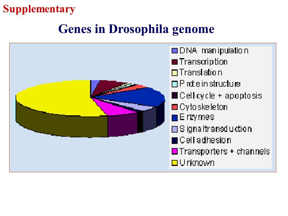 Genes in Drosophila genome Supplementary