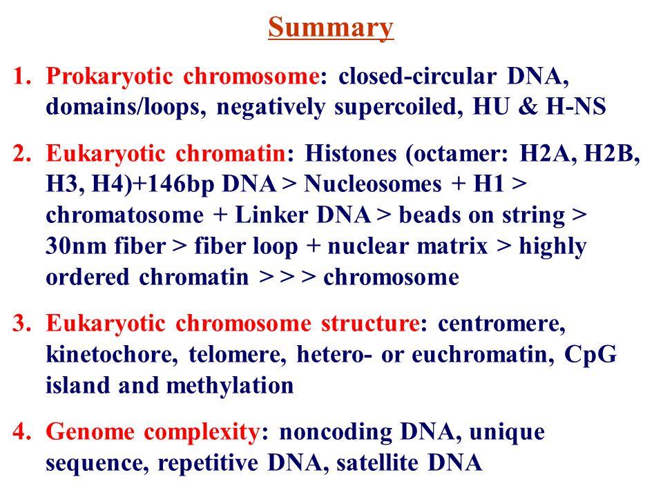 Summary 1.Prokaryotic chromosome: closed-circular DNA, domains/loops, negatively supercoiled, HU & H-NS 2.Eukaryotic chromatin: Histones (octamer: H2A