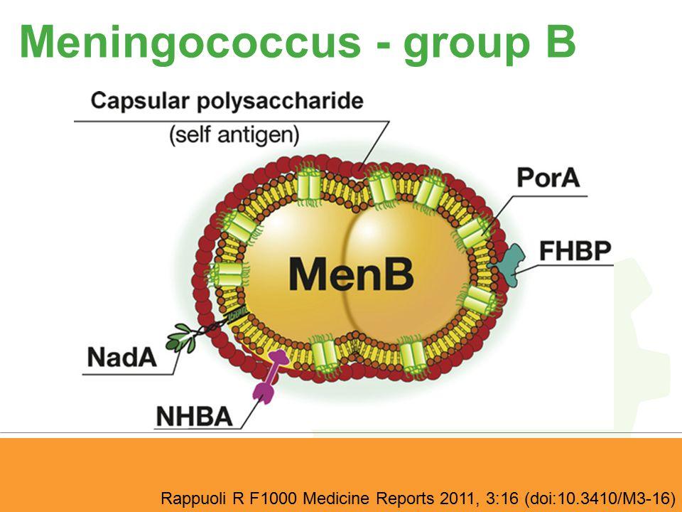 Meningococcus - group B Rappuoli R F1000 Medicine Reports 2011, 3:16 (doi:10.3410/M3-16)