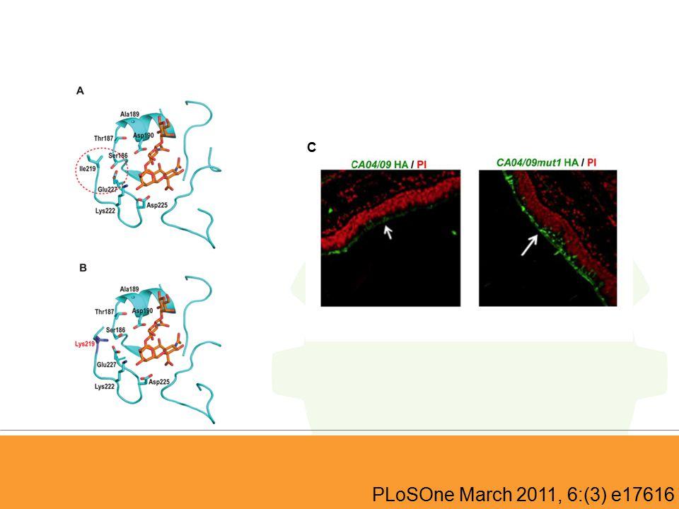 PLoSOne March 2011, 6:(3) e17616 C