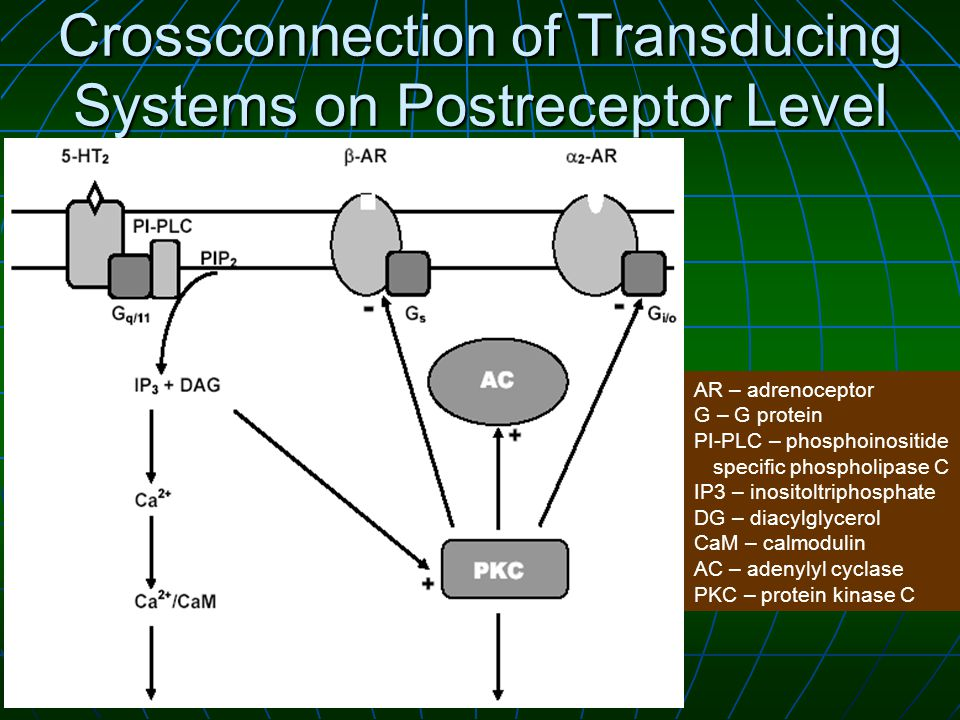 Crossconnection of Transducing Systems on Postreceptor Level AR – adrenoceptor G – G protein PI-PLC – phosphoinositide specific phospholipase C IP3 – inositoltriphosphate DG – diacylglycerol CaM – calmodulin AC – adenylyl cyclase PKC – protein kinase C