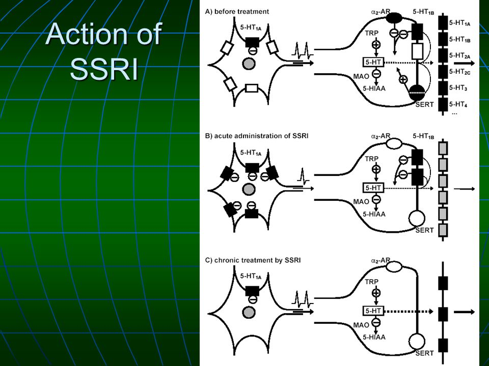 Action of SSRI