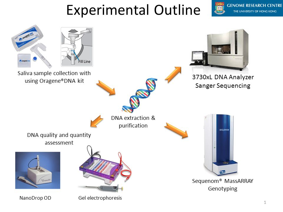 Saliva sample collection with using Oragene®DNA kit DNA extraction & purification Gel electrophoresis Experimental Outline DNA quality and quantity assessment Sequenom® MassARRAY Genotyping 3730xL DNA Analyzer Sanger Sequencing 1 NanoDrop OD