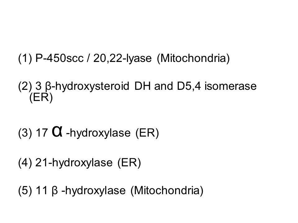 (1) P-450scc / 20,22-lyase (Mitochondria) (2) 3 β-hydroxysteroid DH and D5,4 isomerase (ER) (3) 17 α -hydroxylase (ER) (4) 21-hydroxylase (ER) (5) 11