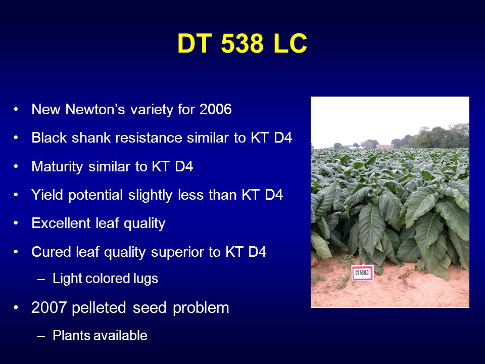 DT 538 LC New Newton's variety for 2006 Black shank resistance similar to KT D4 Maturity similar to KT D4 Yield potential slightly less than KT D4 Excellent leaf quality Cured leaf quality superior to KT D4 –Light colored lugs 2007 pelleted seed problem –Plants available