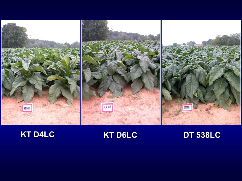 KT D4LC KT D6LC DT 538LC