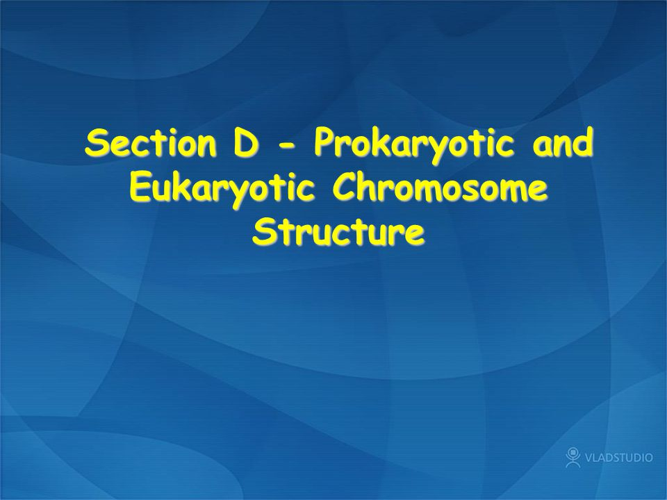 Section D - Prokaryotic and Eukaryotic Chromosome Structure