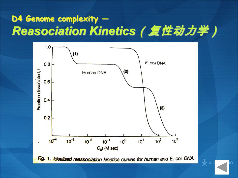 D4 Genome complexity — Reasociation Kinetics (复性动力学)