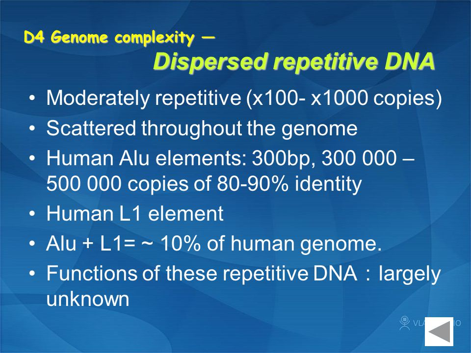 D4 Genome complexity — Dispersed repetitive DNA Moderately repetitive (x100- x1000 copies) Scattered throughout the genome Human Alu elements: 300bp,