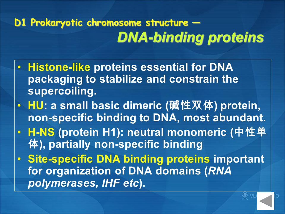 D1 Prokaryotic chromosome structure — DNA-binding proteins Histone-like proteins essential for DNA packaging to stabilize and constrain the supercoili