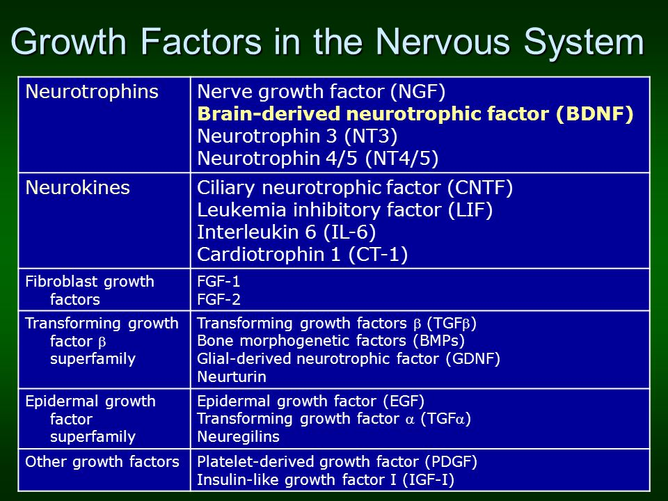 Growth Factors in the Nervous System NeurotrophinsNerve growth factor (NGF) Brain-derived neurotrophic factor (BDNF) Neurotrophin 3 (NT3) Neurotrophin