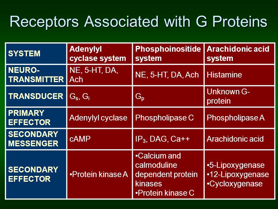 Receptors Associated with G Proteins SYSTEM Adenylyl cyclase system Phosphoinositide system Arachidonic acid system NEURO- TRANSMITTER NE, 5-HT, DA, A