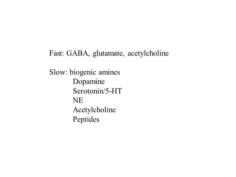Fast: GABA, glutamate, acetylcholine Slow: biogenic amines Dopamine Serotonin/5-HT NE Acetylcholine Peptides