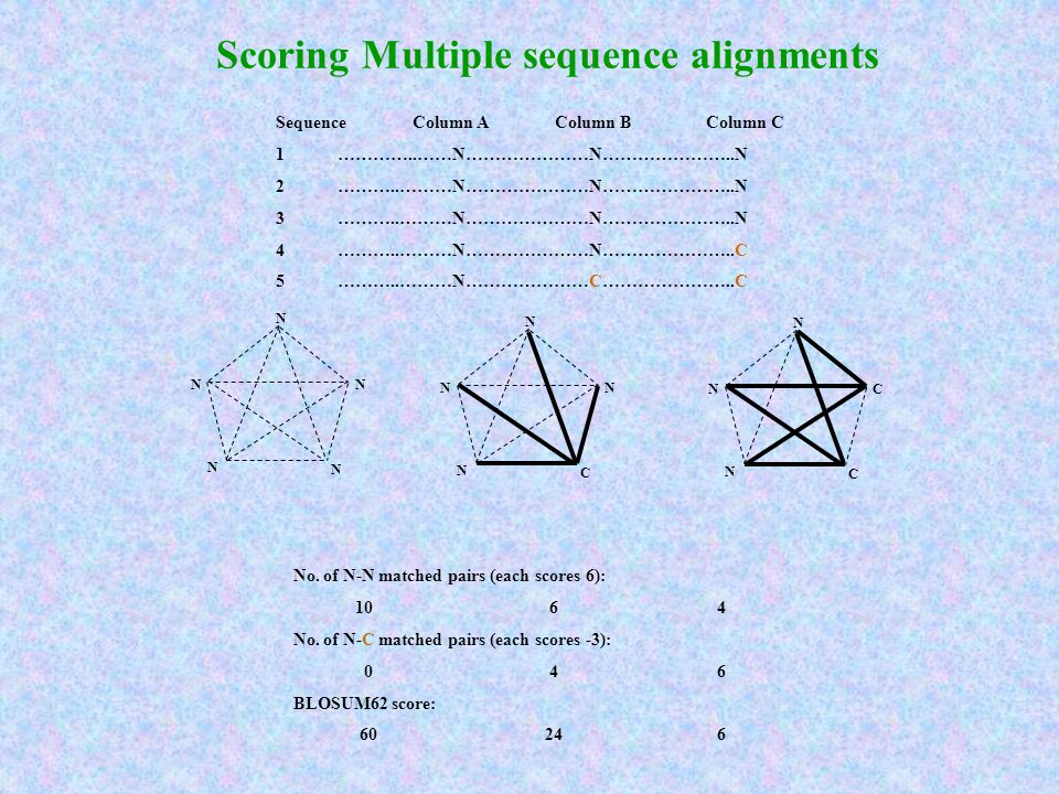 Scoring Multiple sequence alignments Sequence Column A Column B Column C 1 …………..……N…………………N…………………..N 2 ………..………N…………………N…………………..N 3 ………..………N…………………N…………………..N 4 ………..………N…………………N…………………..C 5 ………..………N…………………C…………………..C No.