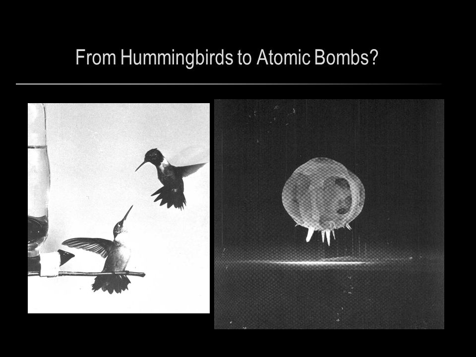 From Hummingbirds to Atomic Bombs?