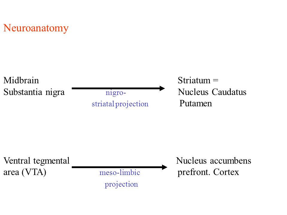 Neuroanatomy Midbrain Striatum = Substantia nigra nigro- Nucleus Caudatus striatal projection Putamen Ventral tegmental Nucleus accumbens area (VTA) m
