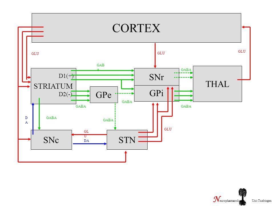 CORTEX STRIATUM GPe GPi SNr THAL SNcSTN GLU DADA GABA D1(+) D2(-) GL U DA GLU N europharmacology Uni-Tuebingen
