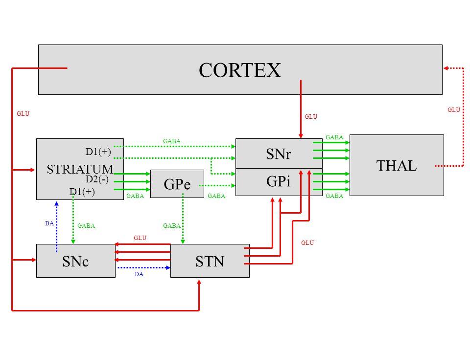 CORTEX STRIATUM GPe GPi SNr THAL SNcSTN GLU DA GABA D1(+) D2(-) D1(+) GLU