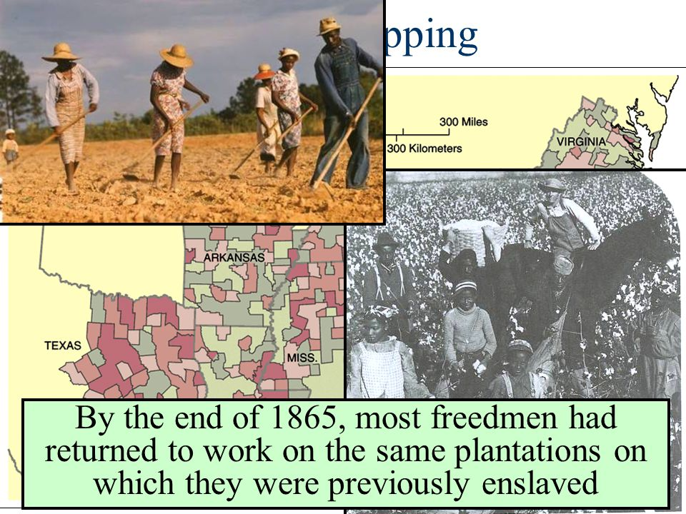 Sharecropping By the end of 1865, most freedmen had returned to work on the same plantations on which they were previously enslaved