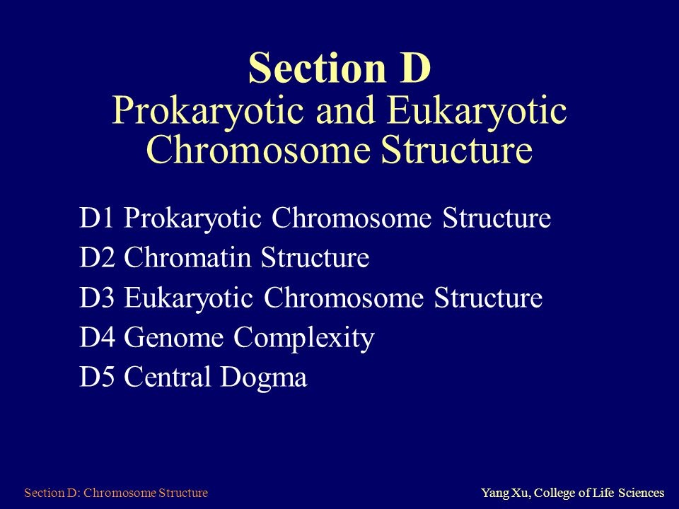Section D: Chromosome StructureYang Xu, College of Life Sciences Section D Prokaryotic and Eukaryotic Chromosome Structure D1 Prokaryotic Chromosome S
