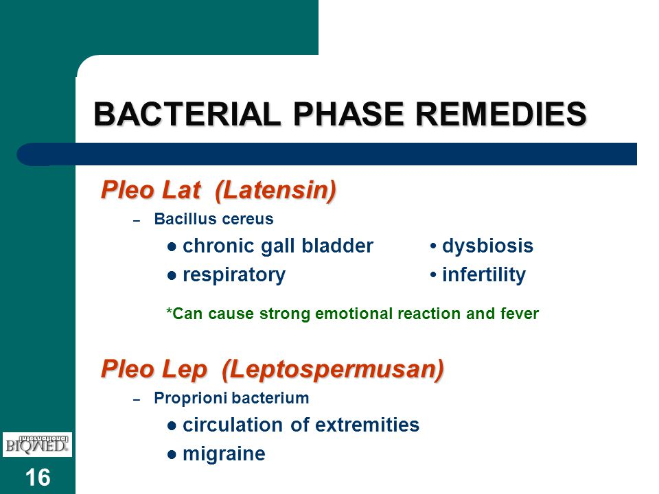 16 BACTERIAL PHASE REMEDIES Pleo Lat (Latensin) – Bacillus cereus chronic gall bladder dysbiosis respiratory infertility *Can cause strong emotional r