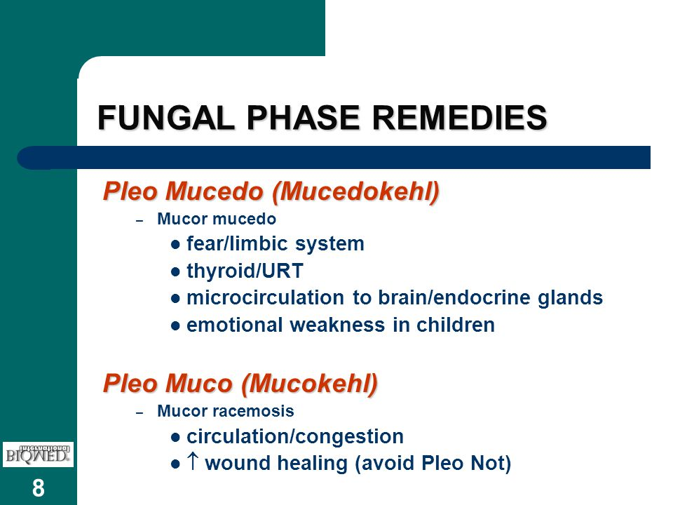8 FUNGAL PHASE REMEDIES Pleo Mucedo (Mucedokehl) – Mucor mucedo fear/limbic system thyroid/URT microcirculation to brain/endocrine glands emotional we