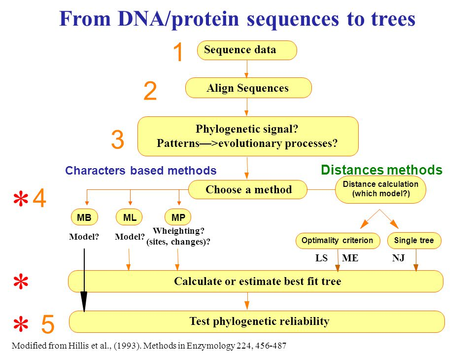 Phylogenies from proteins Parsimony Distance matrices Maximum likelihood Bayesian methods * * *