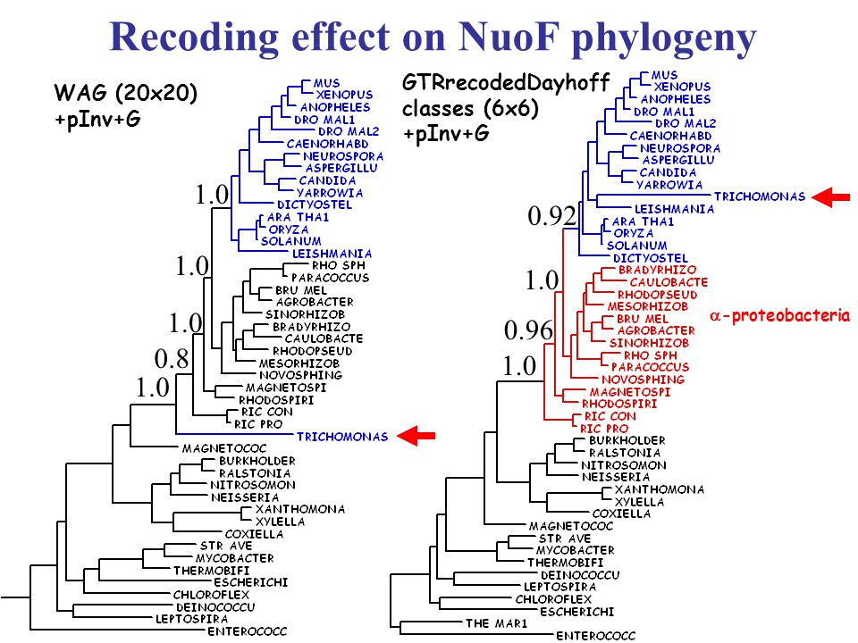 WAG (20x20) +pInv+G GTRrecodedDayhoff classes (6x6) +pInv+G  -proteobacteria Recoding effect on NuoF phylogeny 0.92 1.0 0.8 1.0 0.96 1.0