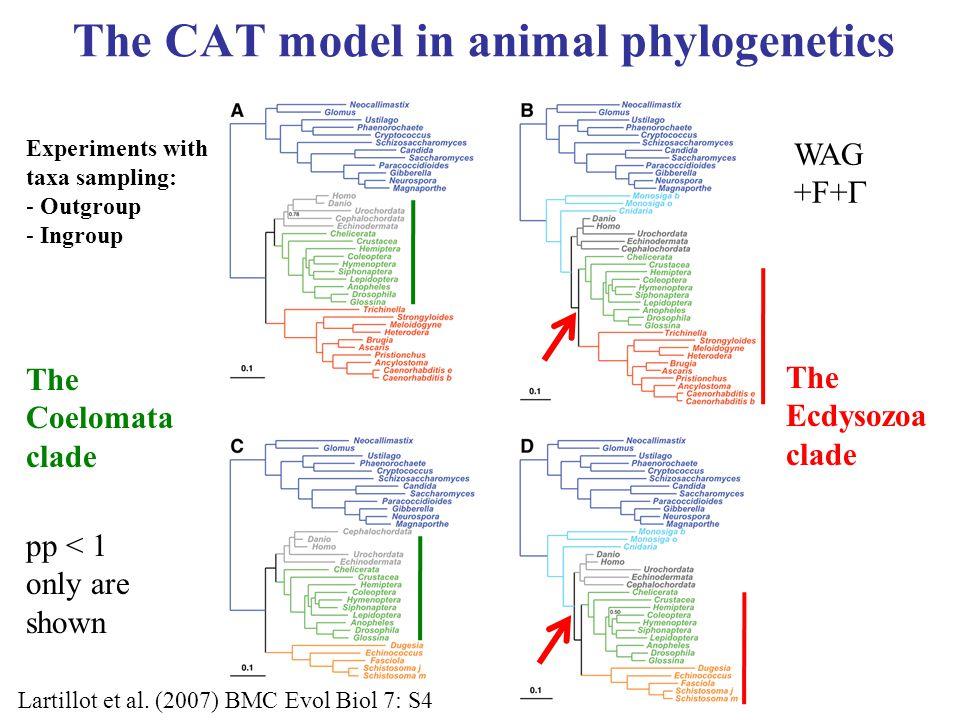 The CAT model in animal phylogenetics WAG +F+  The Ecdysozoa clade Lartillot et al.