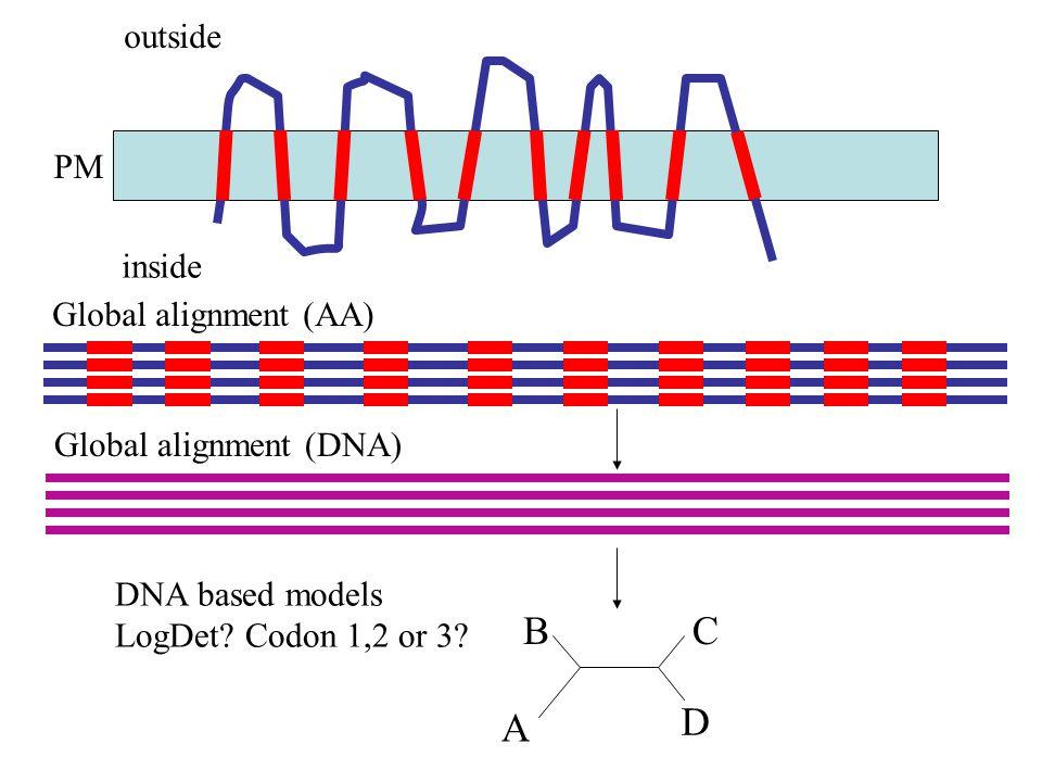 outside PM inside Global alignment (AA) A BC D Global alignment (DNA) DNA based models LogDet.