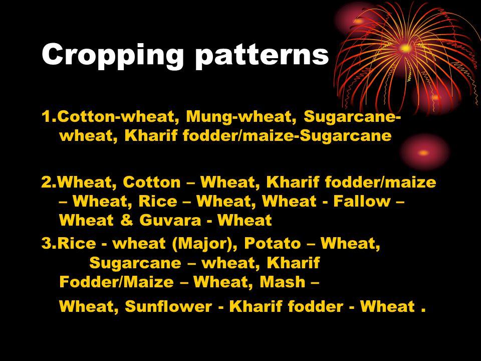 Cropping patterns 1.Cotton-wheat, Mung-wheat, Sugarcane- wheat, Kharif fodder/maize-Sugarcane 2.Wheat, Cotton – Wheat, Kharif fodder/maize – Wheat, Ri