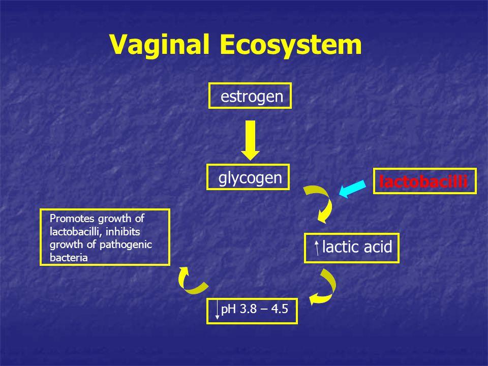 lactobacilli Promotes growth of lactobacilli, inhibits growth of pathogenic bacteria lactic acid estrogen glycogen pH 3.8 – 4.5 Vaginal Ecosystem