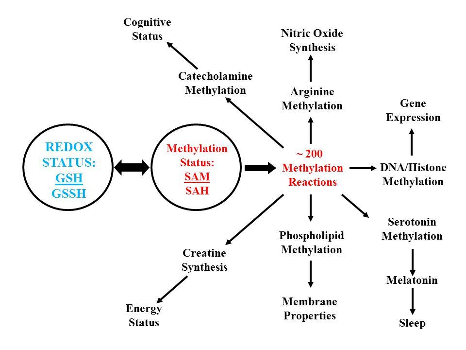 REDOX STATUS: GSH GSSH Methylation Status: SAM SAH ~ 200 Methylation Reactions Nitric Oxide Synthesis Phospholipid Methylation DNA/Histone Methylation