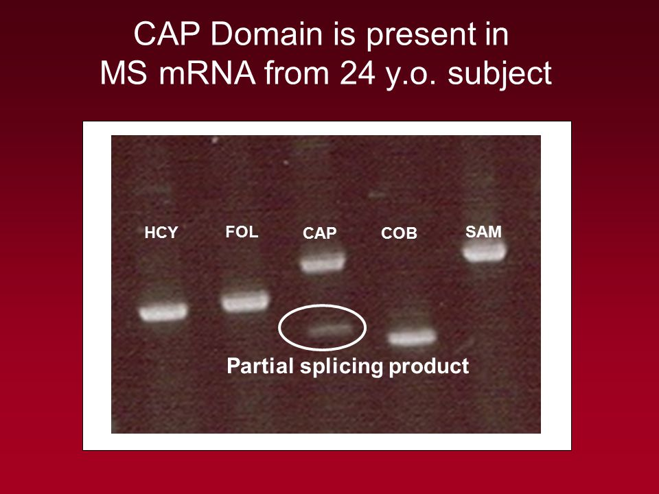 CAP Domain is present in MS mRNA from 24 y.o. subject HCY FOL CAPCOB SAM Partial splicing product