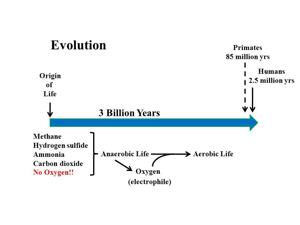 Origin of Life Evolution Anaerobic LifeAerobic Life 3 Billion Years Methane Hydrogen sulfide Ammonia Carbon dioxide No Oxygen!! Oxygen Humans 2.5 mill