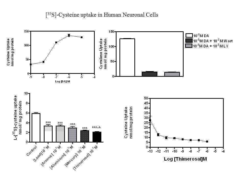 [ 35 S]-Cysteine uptake in Human Neuronal Cells