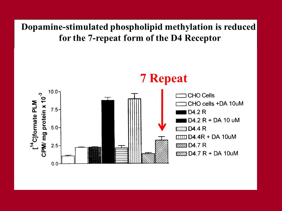 Dopamine-stimulated phospholipid methylation is reduced for the 7-repeat form of the D4 Receptor 7 Repeat