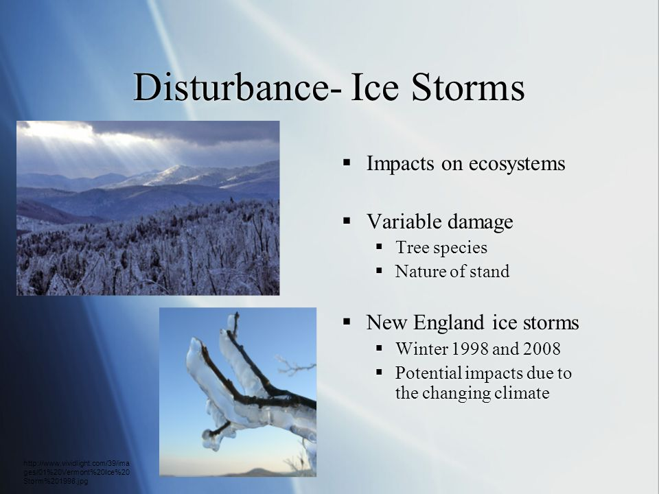 Disturbance- Ice Storms  Impacts on ecosystems  Variable damage  Tree species  Nature of stand  New England ice storms  Winter 1998 and 2008  P